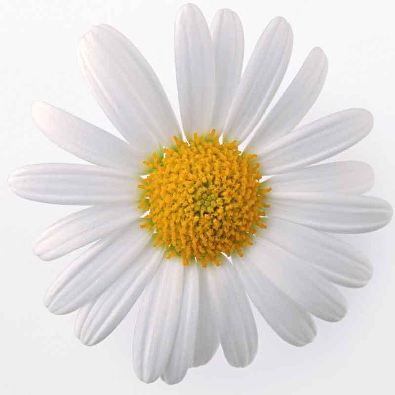 N_flower-008_200x200